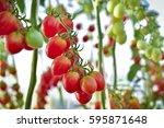 Branch Of Fresh Cherry Tomatoes ...