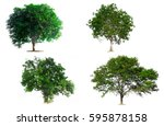 tree isolated on white... | Shutterstock . vector #595878158