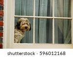 A Cute Dog Waits And Waits For...