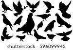 pigeon black and white vector... | Shutterstock .eps vector #596099942
