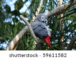 Grey Parrot Sleeping