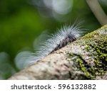 Caterpillar on the tree