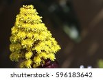 Large Conical Vivid Yellow...