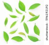 garcinia cowa roxb in diffuse... | Shutterstock . vector #596192192