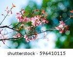 thai sakura   Shutterstock . vector #596410115