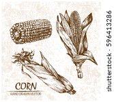 digital vector detailed corn... | Shutterstock .eps vector #596413286