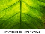 abstract natural green leaf... | Shutterstock . vector #596439026