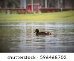 Duck Swimming Inside A Lake