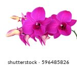 floral of tropical orchids ... | Shutterstock . vector #596485826