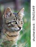 cute kitten in the grass | Shutterstock . vector #59651449