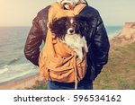 Stock photo close up portrait of cute dog breed papillon sitting in travel backpack and enjoying walking sea 596534162