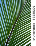 Palm Tree Leaf Background! - stock photo