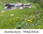 mountain flowers and alp in...   Shutterstock . vector #596625416