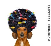 dachshund or sausage dog  with...   Shutterstock . vector #596633966