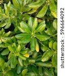 group of green leaves | Shutterstock . vector #596664092