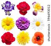 Collection Of Beautiful Iris ...