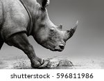 rhino or rhinoceros close up... | Shutterstock . vector #596811986