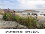Swedish Coast Summer Plants