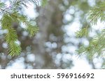 through the trees | Shutterstock . vector #596916692