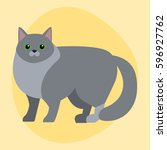 cat breed siberian cute pet... | Shutterstock .eps vector #596927762