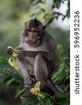 monkey eat banana | Shutterstock . vector #596952236