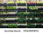 vertical vegetable garden ... | Shutterstock . vector #596989892
