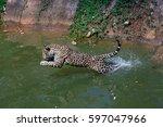 Jaguar Jump .