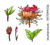 Honeysuckle Flower Blossom....
