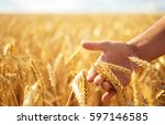wheat sprouts in a farmer's... | Shutterstock . vector #597146585