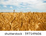 backdrop of ripening ears of... | Shutterstock . vector #597149606