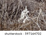dry flower close up against...   Shutterstock . vector #597164702