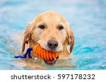 Dog Swimming In Pool With Toy