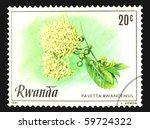 Small photo of RWANDA - CIRCA 1981: A stamp printed in Rwanda showing Pavetta Rwandensis, circa 1981