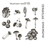 mushroom vector set hand drawing | Shutterstock .eps vector #597249632