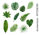 tropical leaves watercolor... | Shutterstock . vector #597258785