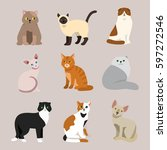 cat breed cute pet portrait...