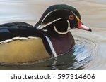 Small photo of Acorn duck (Aix sponsa)