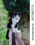Cute Tuxedo Sad Cat Marlyanka