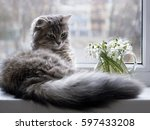 Stock photo pretty gray kitty on the windowsill 597433208
