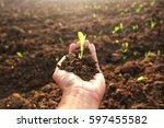 Growing Of Plants. Blur Image
