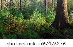 young conifers in a forest | Shutterstock . vector #597476276