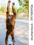 cute and funny brown chimpanzee   Shutterstock . vector #597485936