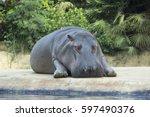 Hippo Relax In Zoo Berlin....