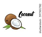 beautiful coconut. vector... | Shutterstock .eps vector #597501782
