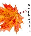 Fall Leaves Photo Studio. Mapl...