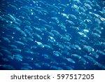 big school of mackerel fish... | Shutterstock . vector #597517205