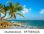Palms Bent On The Shore Of The...