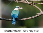 collared kingfisher  one the... | Shutterstock . vector #597709412