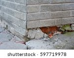 Foundation Repair   Warning...