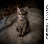 Stock photo surprised kitten cute gray kitten sitting in a plaid 597795392
